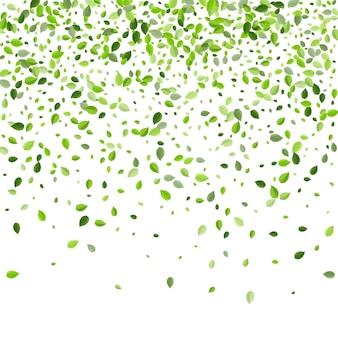 草の葉が落ちる緑の生態学の背景