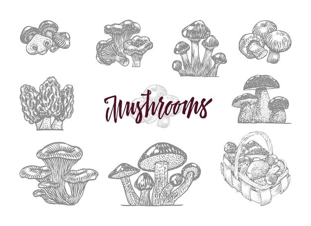 Серый гриб в гравированном наборе с большим бордовым заголовком и изолированными лесными грибами