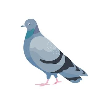 Серый голубь плоской иллюстрации. милая птичка с темно-серым оперением