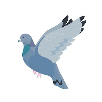 灰色の鳩フラットベクトルイラスト。動物相、野生生物、町の通りの鳥。翼を広げた空飛ぶ鳩。街の屋外の住人、白い背景で隔離の人口密集地域の住民。