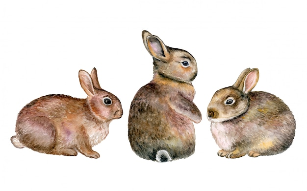 Gray rabbits, hares in watercolor