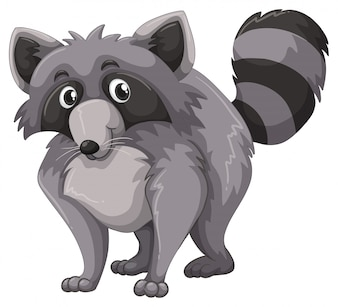 Gray raccoon with happy face