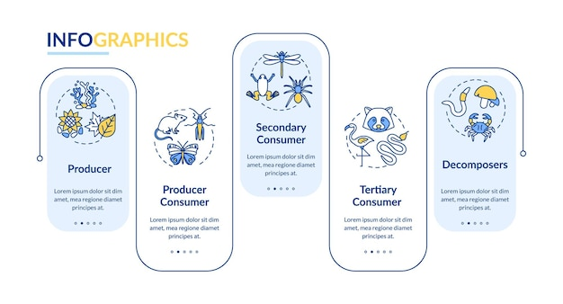 Grazing food chain vector infographic template. energy producer and consumer presentation design elements. data visualization with 5 steps. process timeline chart. workflow layout with linear icons