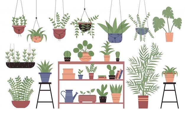 Great amount variety houseplants in pots flat design illustration set