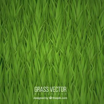 Большой фон реалистичной травы