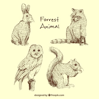 Great collection of forest animals
