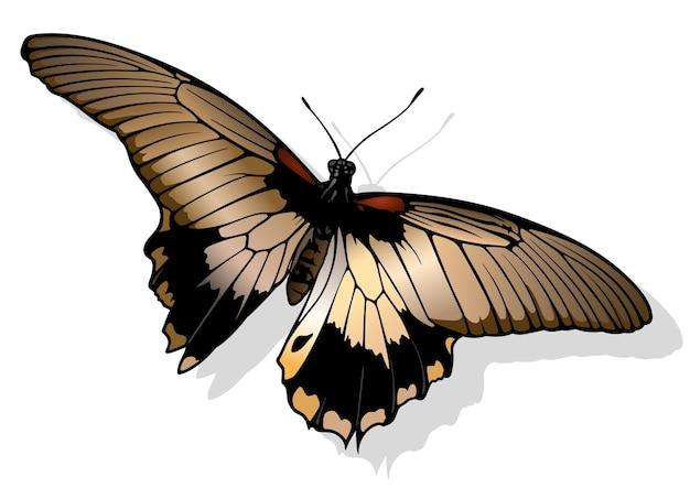 Великая мормонская бабочка папилио мемнон