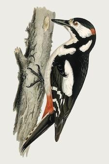 Большой пятнистый дятел вектор птица рисованной