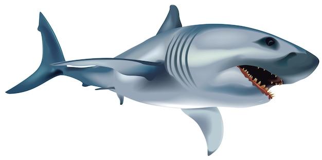 Большая белая акула carcharodon carcharias