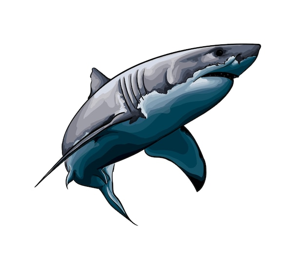 Большая белая акула из всплеска акварельного цветного рисунка векторная иллюстрация красок