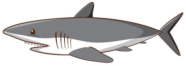 白い背景の上のホオジロザメ
