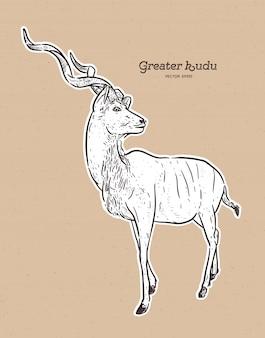 Greater kudu antelope hand drawn illustration