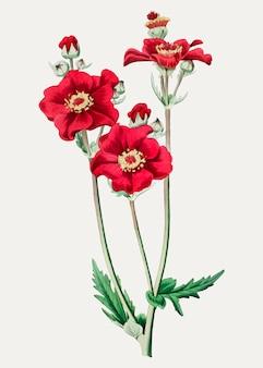 Grecian rose