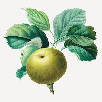 アンリ=ルイ・デュアメル・デュ・モンソーのアートワークからリミックスされた、葉のアートプリントが付いた青リンゴのベクトル