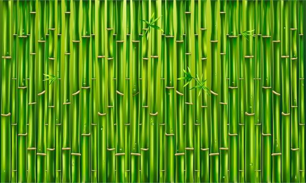 緑の竹のフェンス、テクスチャの背景、竹のパノラマ