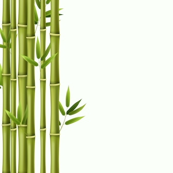 Green bamboo rainforest stems illustration