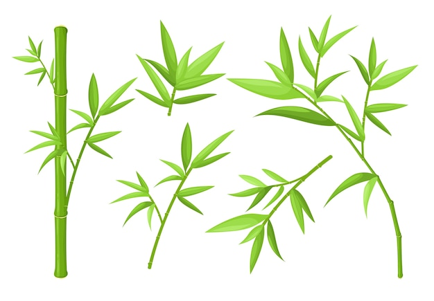 Green bamboo stems and leaves colorful  illustrations set asian exotic tropical plants