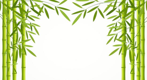 흰색 배경에 고립 된 잎 녹색 대나무 줄기.