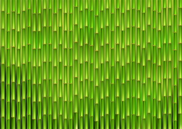 Зеленые стебли бамбука.
