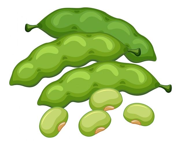 Зеленые бобы на белом фоне