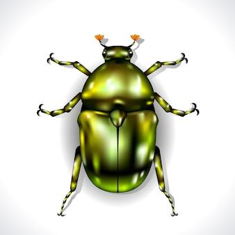 Зеленый жук изолирован