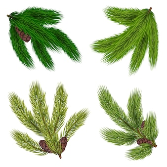 Коллекция зеленые ветки хвойных деревьев