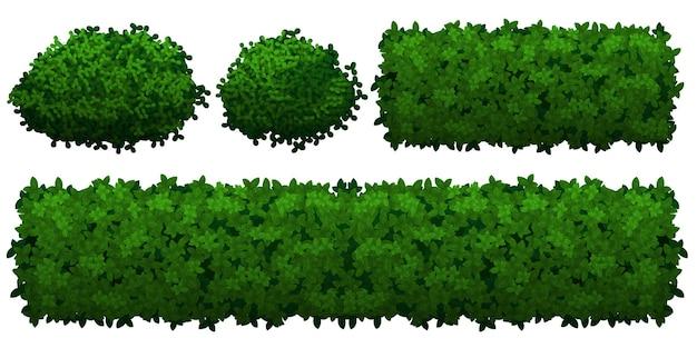 Зеленые кусты и заборы разной формы, изолированные на белом фоне