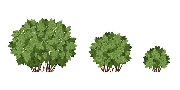 Множество зеленых кустов.