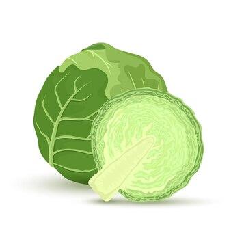 緑のキャベツと白い背景で隔離のキャベツの半分。ベクトルイラスト。料理の材料。
