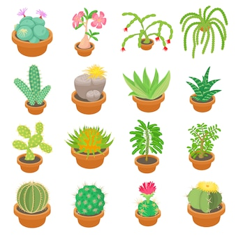 Green cactuses icons set