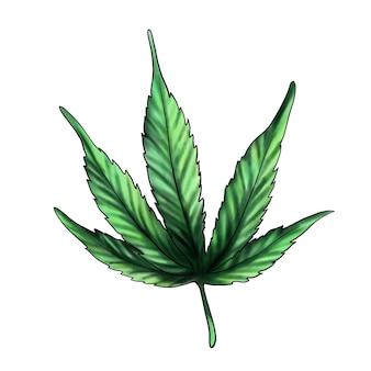 Зеленый лист конопли лист конопли марихуана