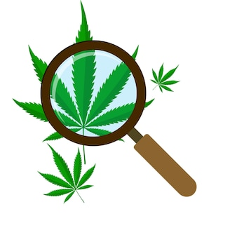 Зеленый лист каннабиса с лупой