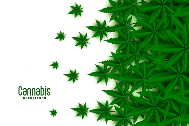 Green cannabis leaves white background