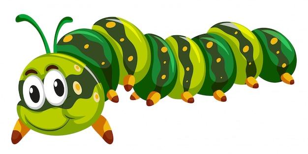 Green caterpillar crawling on white background