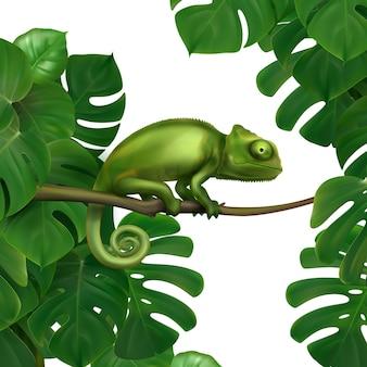 熱帯雨林の緑のカメレオントカゲ