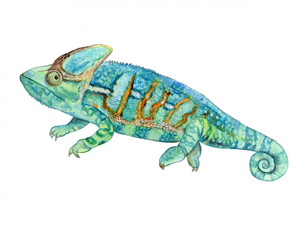 Green chameleon in watercolor