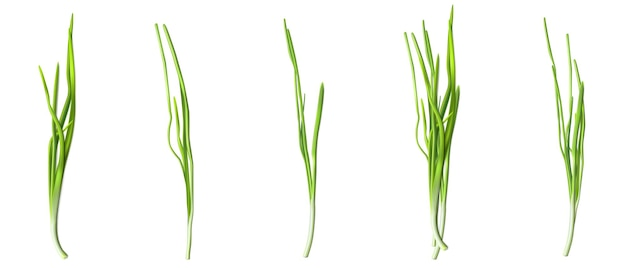 Green chive or onion leaves, fresh verdure of garlic or scallion isolated on white background.