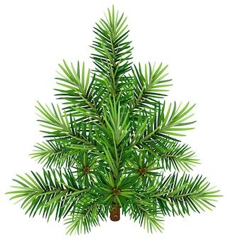 緑のクリスマス松の木。白で隔離