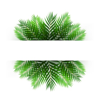緑のココナッツの葉は、テキストスペースで浮かぶ
