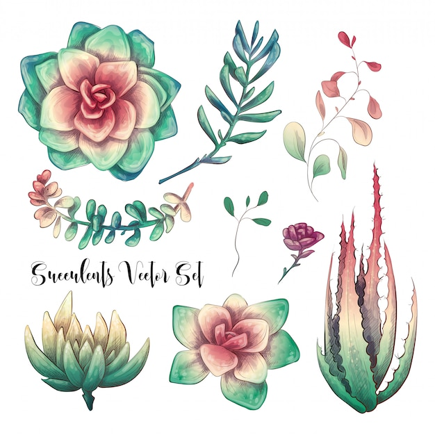 Green colorful succulent bouquets vector design objects.