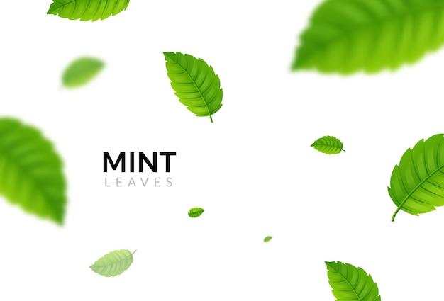 Green eco mint leaf background. ecology mint pattern design plant