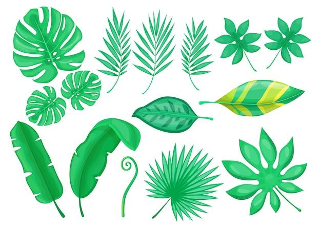 Набор плоских элементов зеленой экзотической листвы