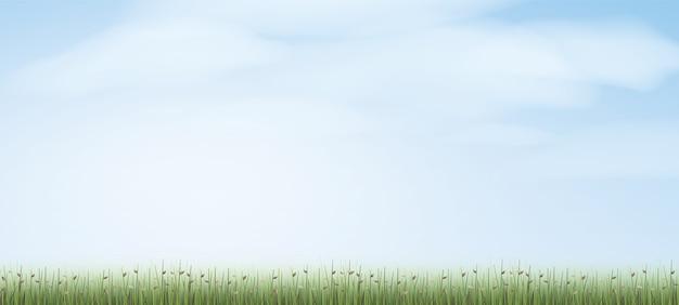 Green field background.