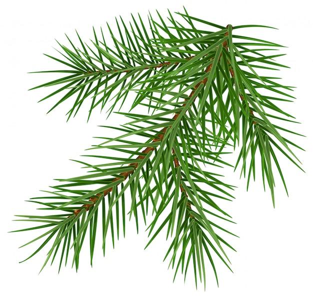 Green fluffy spruce branch accessory symbol christmas