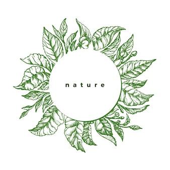 Зеленая листва. ботанический эскиз чайной буч, ветка, листья, цветок. вручите оттянутый винтаж