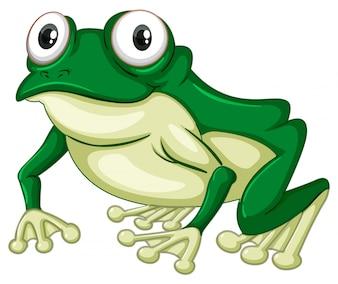 白い背景の上の緑のカエル