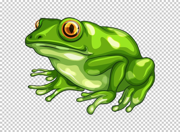 Green frog on transparent