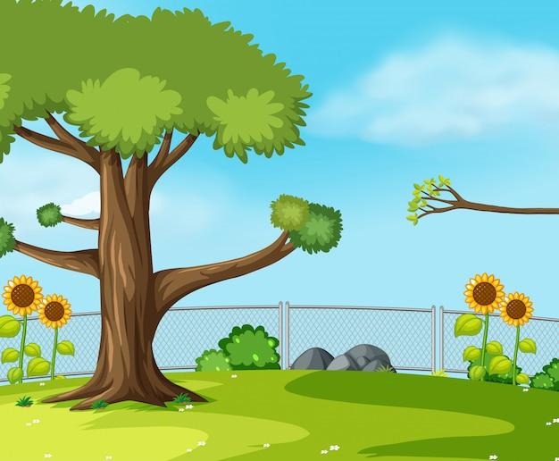 A green garden scene
