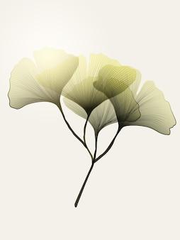 Плакат с зеленым листом гинкго