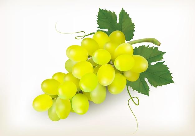 Плоды зеленого винограда, изолированные на белом фоне. вектор
